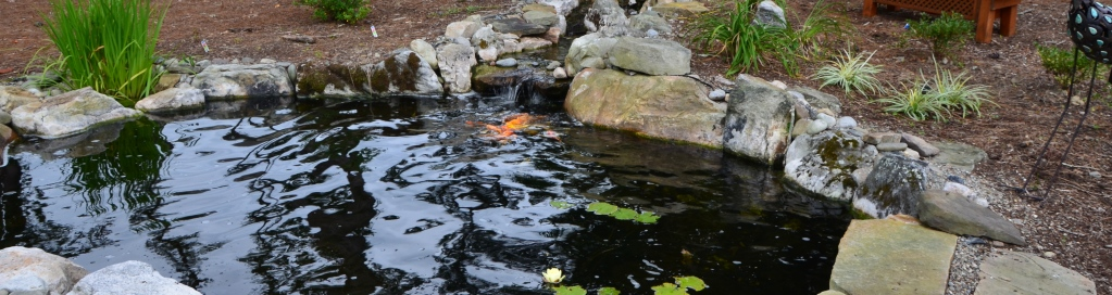 Koi Pond Water Garden