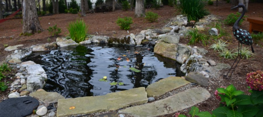 Raleigh Koi Pond